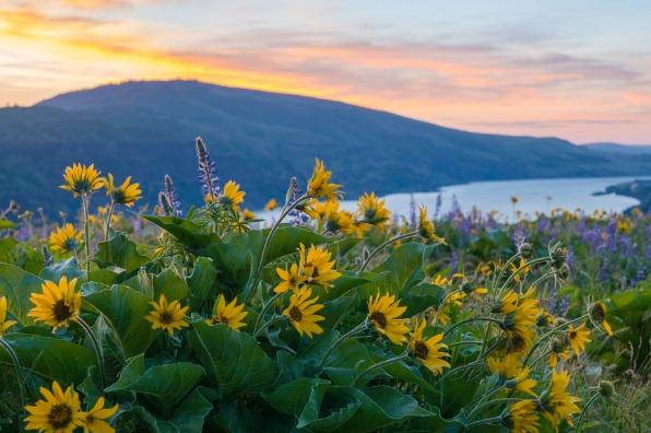 Mt  Hood and Columbia River Gorge Blog