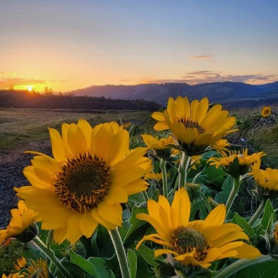Wildflowers at Rowena